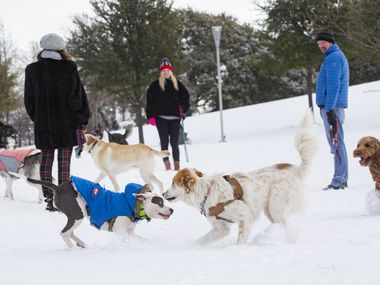 Dogs play at a snow covered Griggs Park in Uptown Dallas on Monday, Feb. 15, 2021. (Juan Figueroa/ The Dallas Morning News)