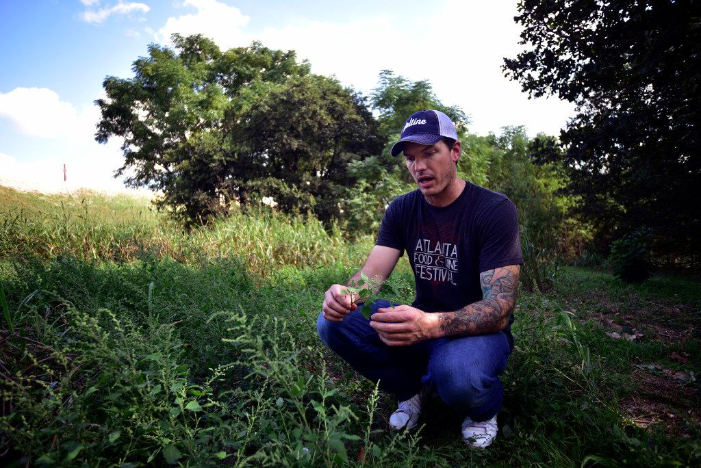 Chef Matt McCallister of FT33 holds a batch of wild spinach as he walks through an area near White Rock Lake looking for wild ingredients.