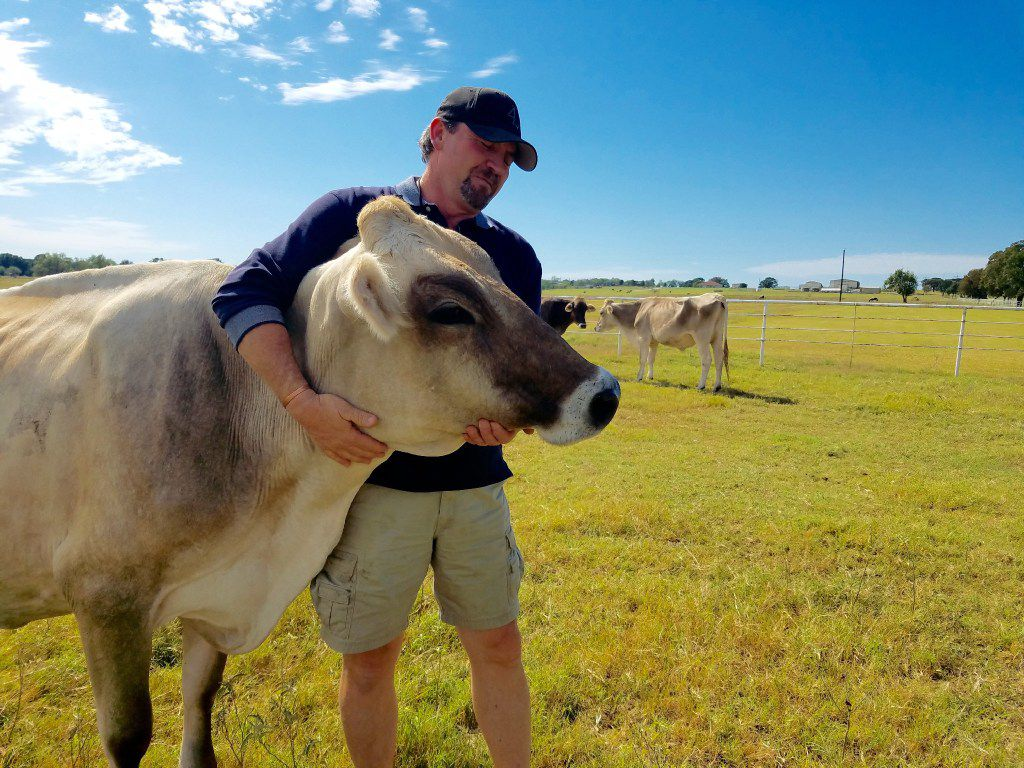Mike Moyers gives a hug to one of his brown Swiss cows at Sandy Creek Farms in Bridgeport.