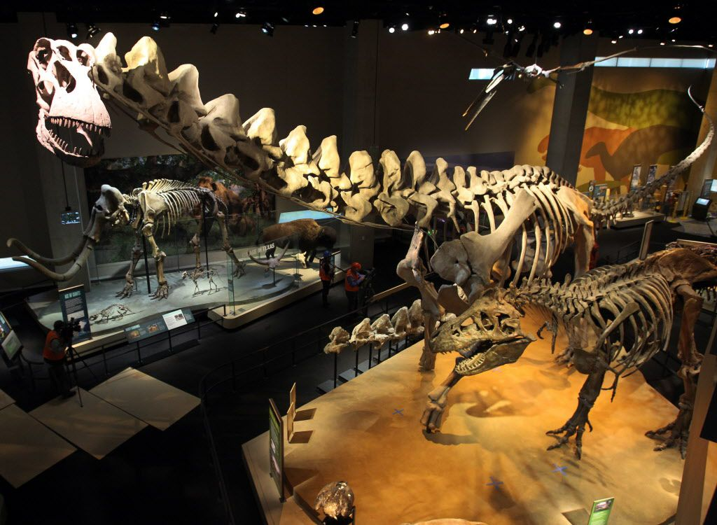 The main dinosaur exhibit in the T. Boone Pickens Life Then and Now Hall at the Perot Museum of Nature and Science in Dallas on Tuesday, October 30, 2012. The tallest skeleton at top left is Alamosaurus.