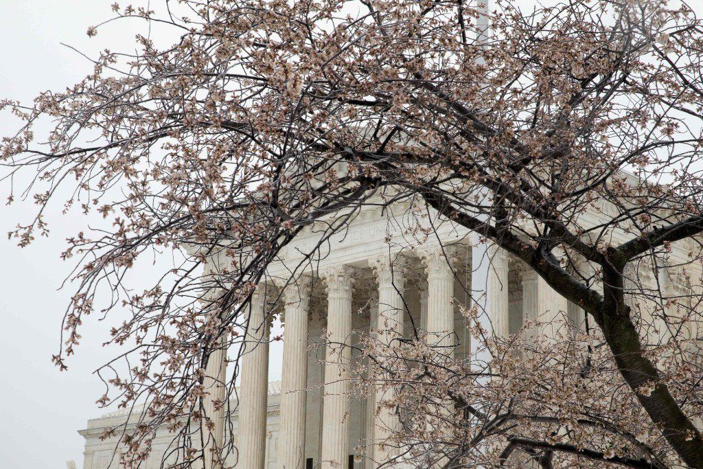 Snow and ice cover early blooms on trees near the US Supreme Court in Washington, DC March 14, 2017 Winter Storm Stella dumped snow and sleet Tuesday across the northeastern United States where thousands of flights were canceled and schools closed, but appeared less severe than initially forecast. After daybreak the National Weather Service (NWS) revised down its predicted snow accumulation, saying that the storm had moved across the coast.  / AFP PHOTO / Tasos KatopodisTASOS KATOPODIS/AFP/Getty Images