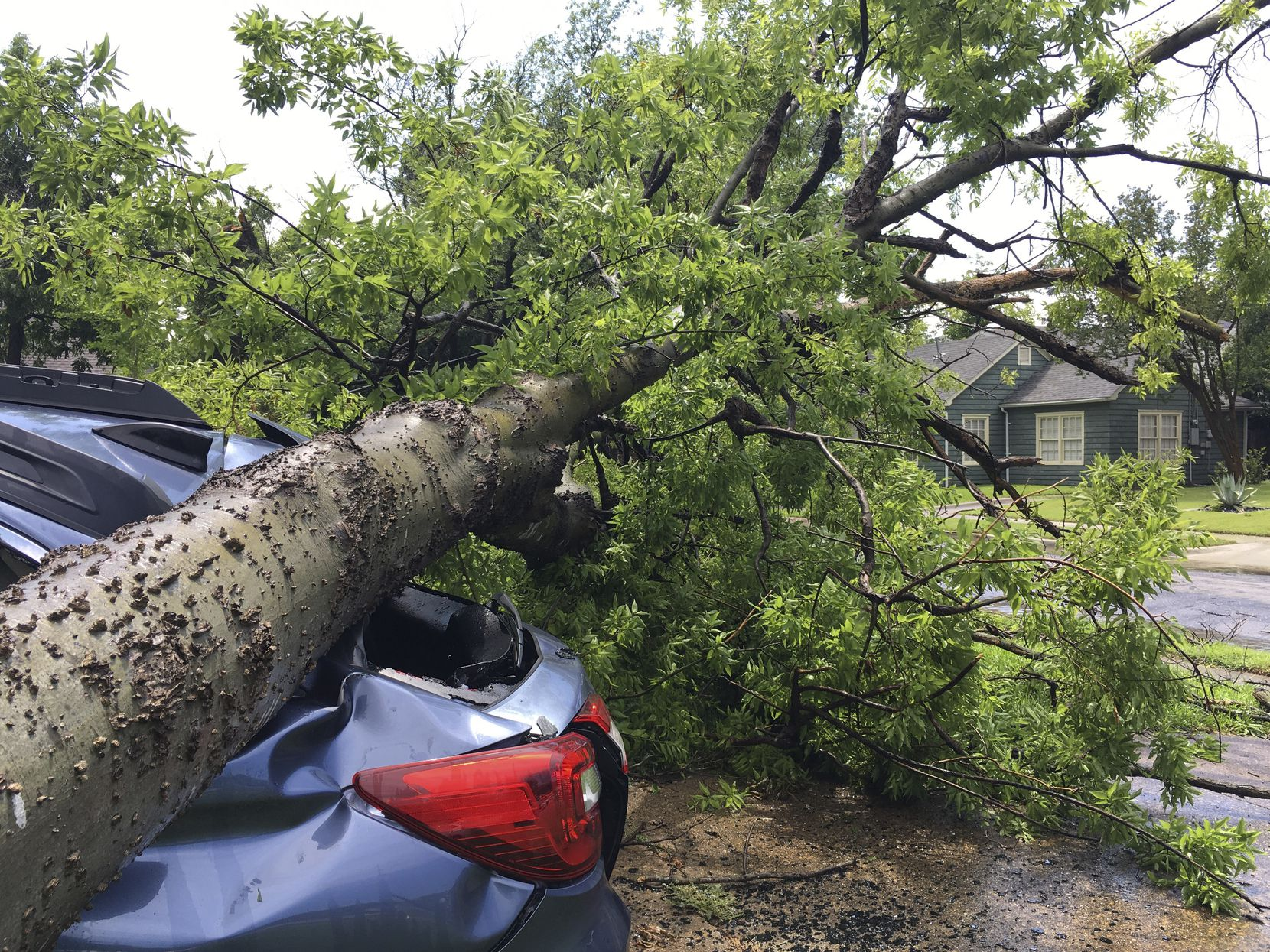 A tree from one property smashed a car in a neighbor's driveway when it fell in a severe storm in Old East Dallas on June 9.