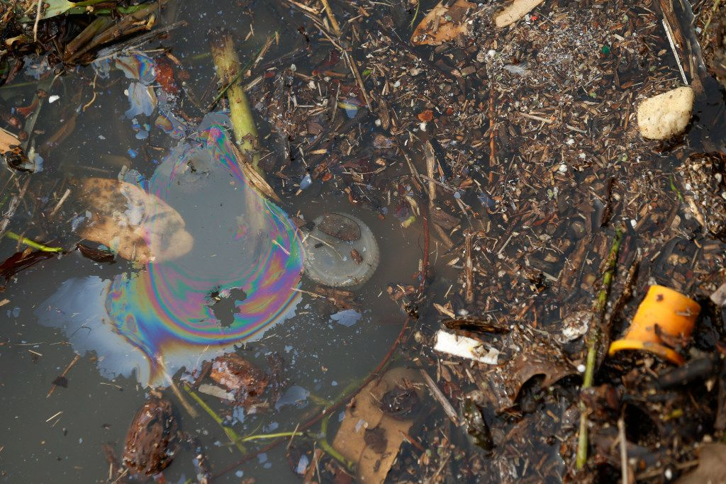 Oil and debris on the shoreline of Bachman Lake earlier this week