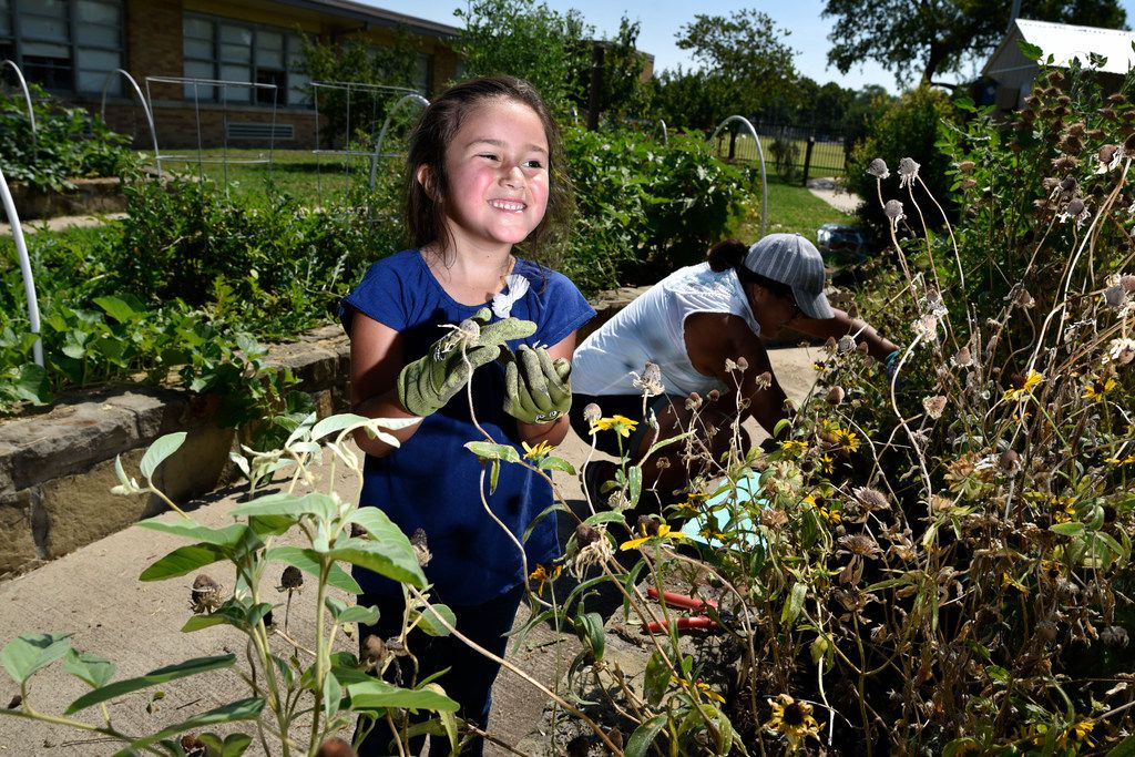 Sophia Terry, 6, tends to a wildflower garden bed with her mother Maria Amaya, 36, in the Edwin J. Kiest Elementary School garden.