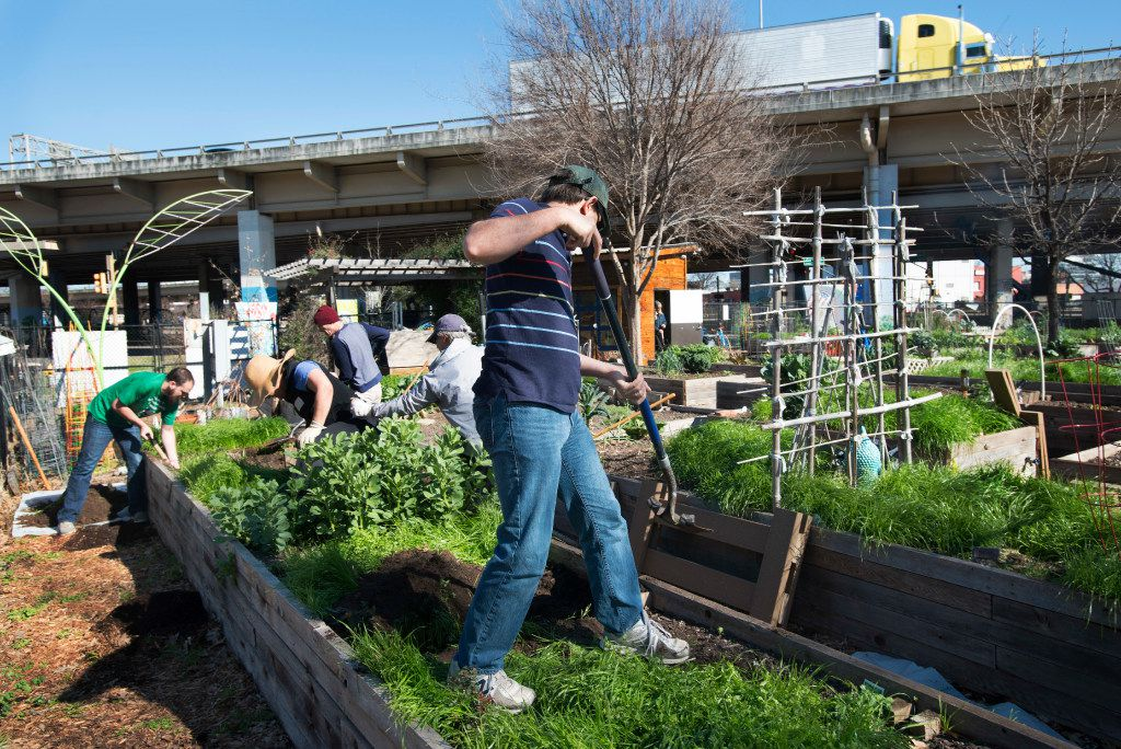 Members of Deep Ellum Urban Gardens work to remove soil from one of the raised beds.