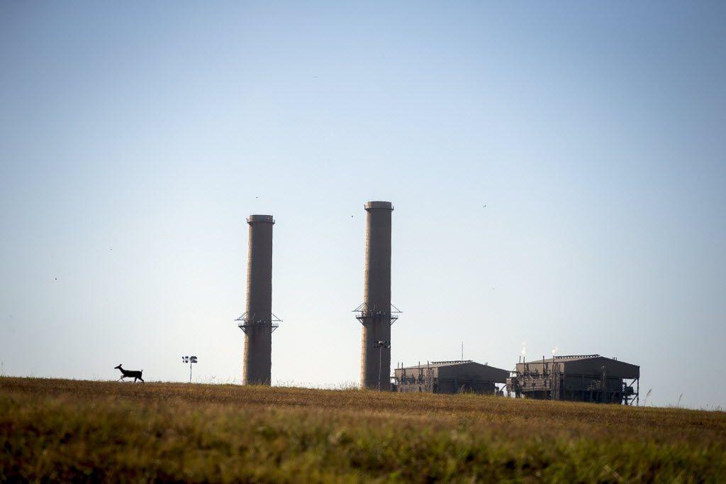 A doe runs across a field near the Big Brown coal plant Wednesday, October 14, 2015 in Fairfield, Texas. (G.J. McCarthy/The Dallas Morning News)