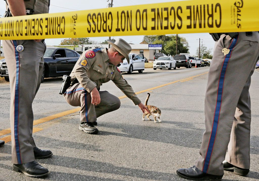 Texas State trooper John Henke visits with a kitten who wanders by the blockcade on the road outside the First Baptist Church of Sutherland Springs, Texas. At least 26 people died Sunday after a gunman opened fire at a Baptist church in the small town southeast of San Antonio. Photographed on Monday, November 6, 2017. (Louis DeLuca/The Dallas Morning News)