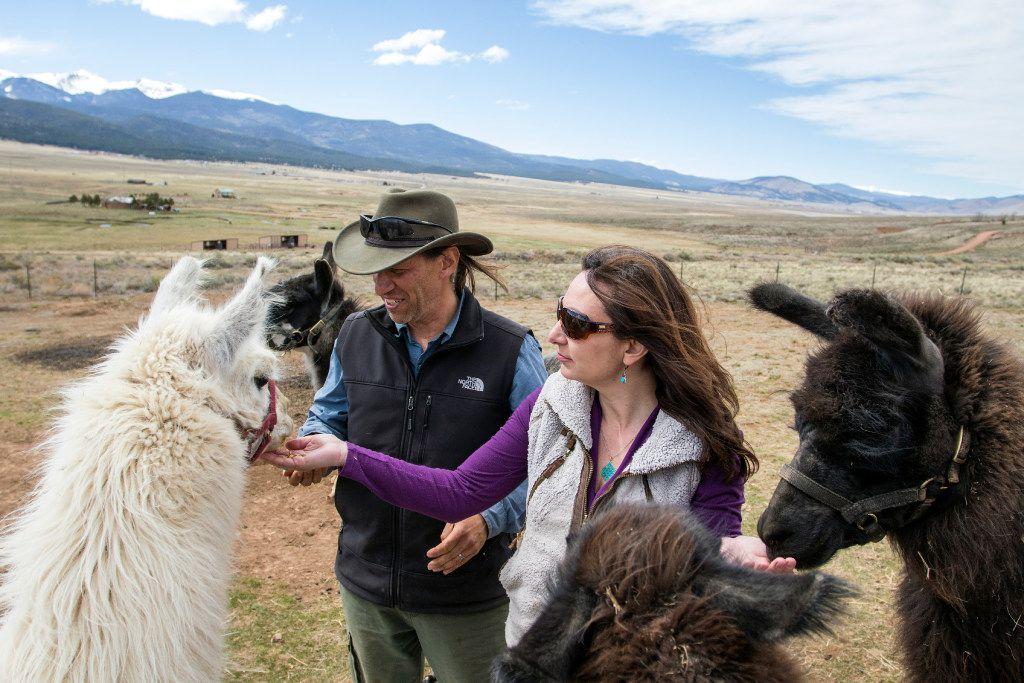 Wild Earth Llama Adventures in Taos