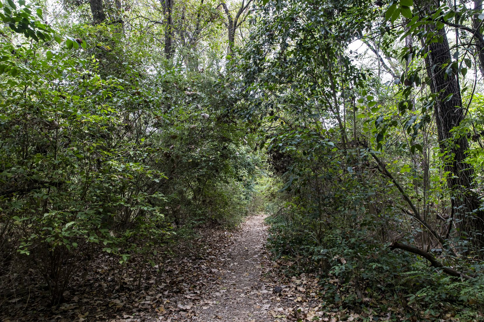 """Foliage arches over the footpaths of the Old Fish Hatchery nature area. """"It's a special place,"""" District 9 City Council member Paula Blackmon says. """"Once you get in there, you lose track of time — and that you are even in Dallas."""""""