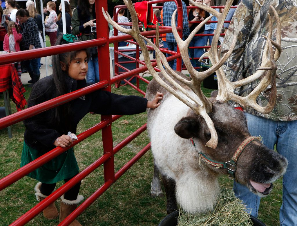 Jasmine Alvarez 9, of Dallas pets one of the reindeer during the 2016 Angel Tree Extravaganza for The Salvation Army Angel Tree at NorthPark Center on Black Friday, November 25, 2016 in Dallas, Texas. (David Woo/The Dallas Morning News)