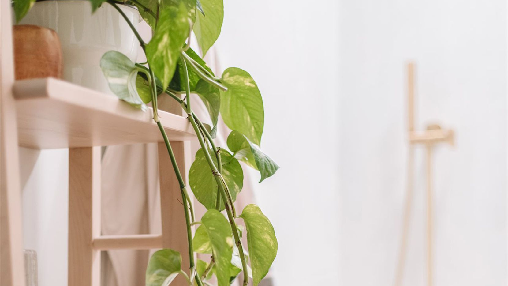 Try these healthy behaviors and design tips to help you bring nature's sanctuary indoors.