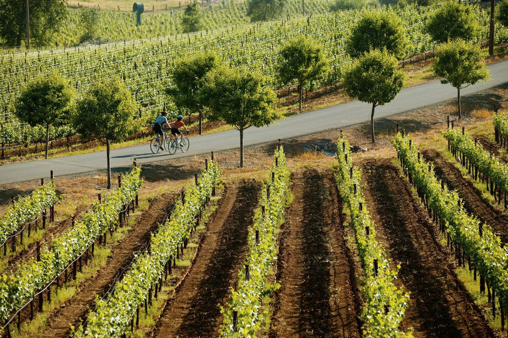 Wine Country Bikes offers daylong bicycle tours of the vineyards around Healdsburg, Calif., that make stops at three wineries in Sonoma County.