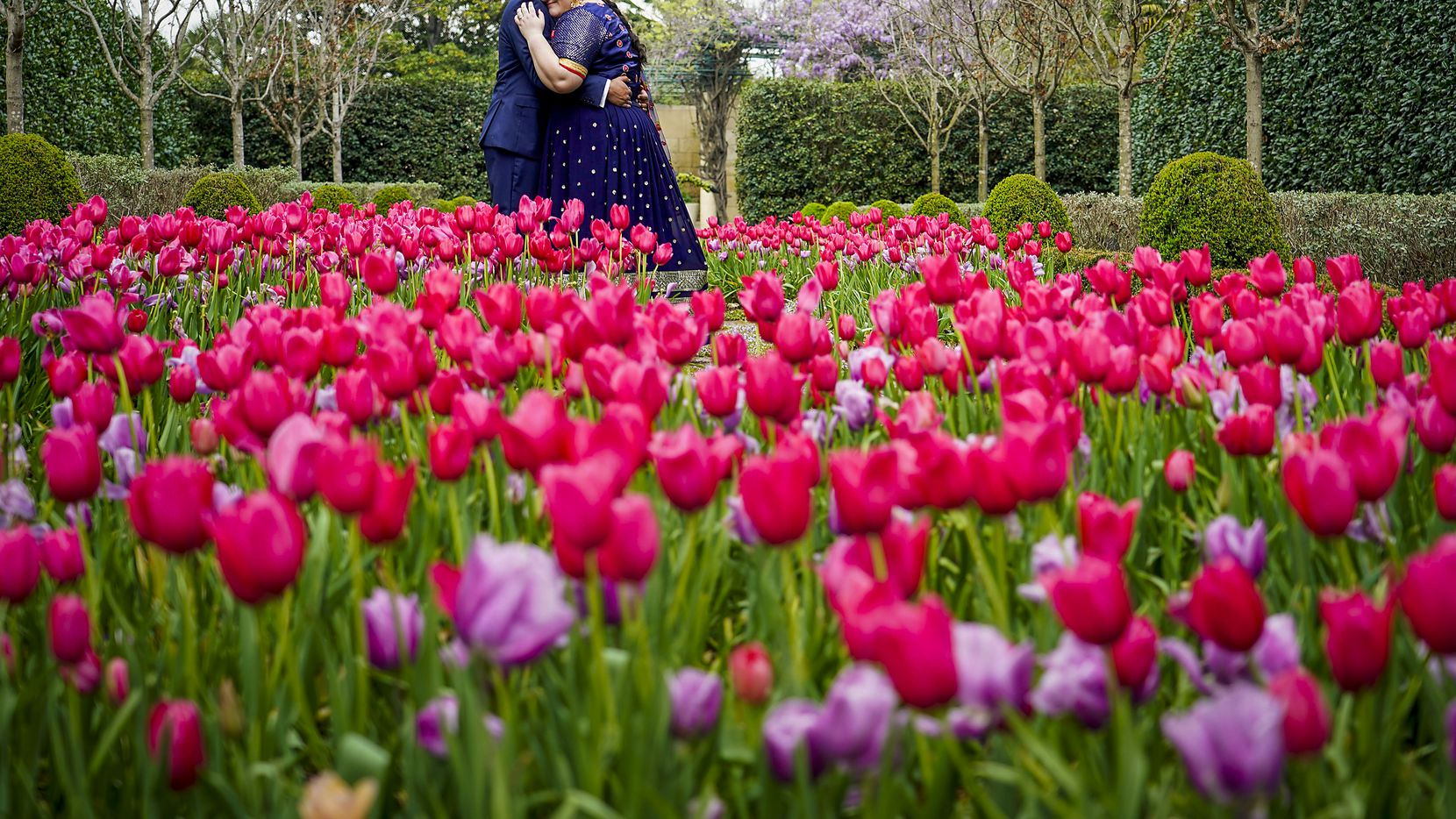 Newlyweds Laura Remson and Abhishek Ravi pose for their wedding photos after being married at the Dallas Arboretum.
