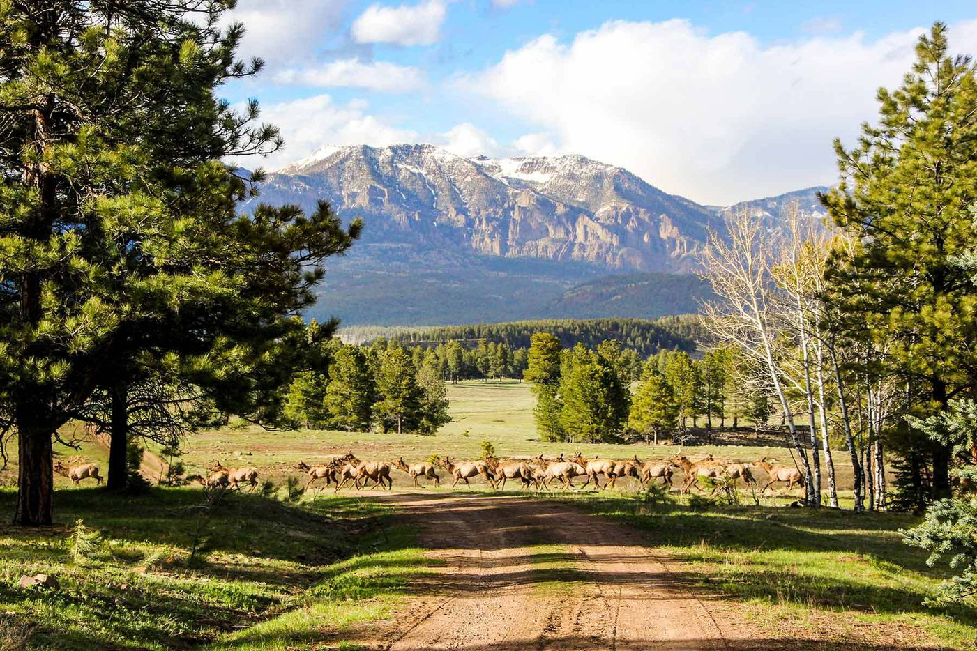 CEO and founder of McKinney-based Service First Mortgage Shawn Broussard, along with his wife Martha Broussard, purchased this 9,600-acre property in Pagosa Springs, Colorado. Piedra Valley Ranch will be stewarded under the Broussard Environmental and Wildlife Conservation Foundation.