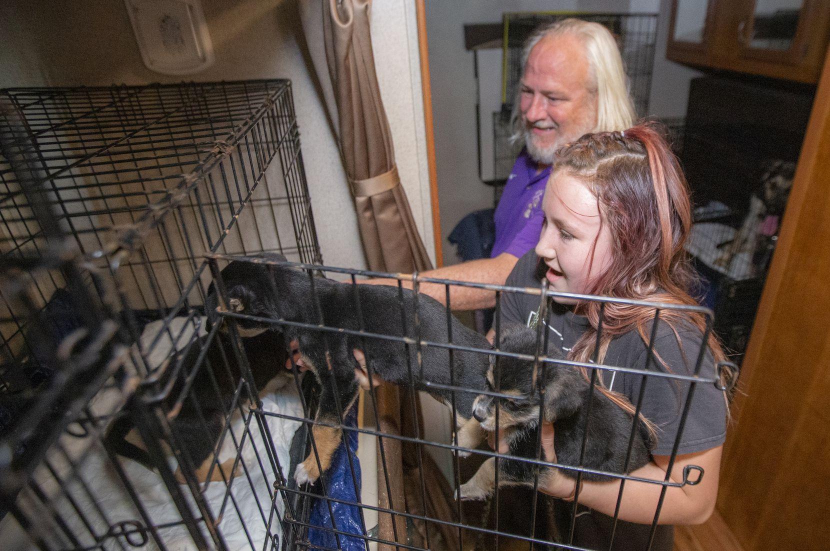 """James Harbor helps Logan Fessler, 12, place several rescue puppies into a cage for transport from the Wise County Animal Shelter in Decatur to their new homes in Illinois and Wisconsin. """"We love dogs and want to run our own animal shelter when we're older,"""" Fessler says of herself and her sister."""