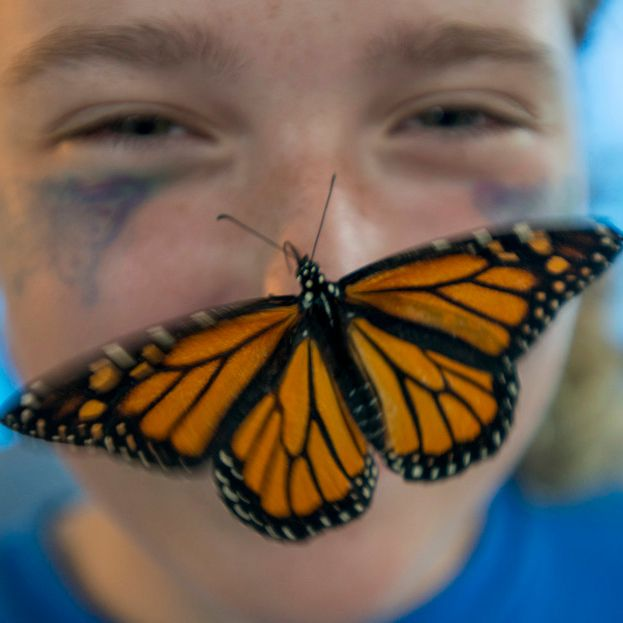A Monarch butterfly lands on a girl's nose.