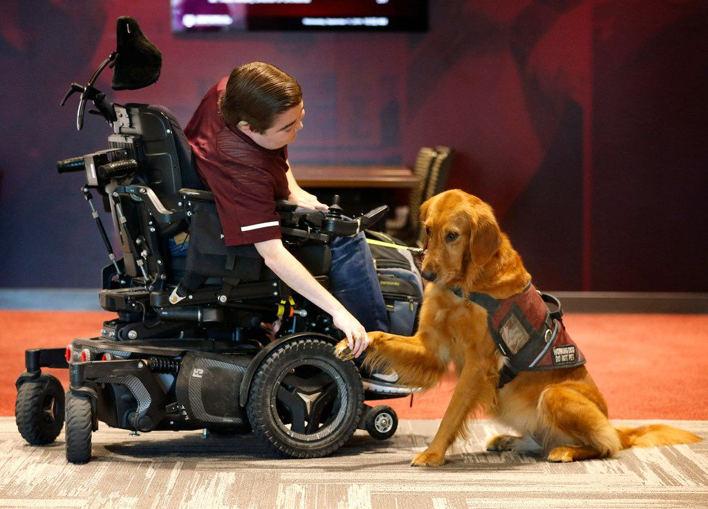 Texas A&M student Kyle Cox, who has Duchenne muscular dystrophy, shakes Amber's paw before heading to symphonic band rehearsal at the Music Activities Center on the Texas A&M campus in College Station on Sept. 11, 2019. Amber, a golden retriever service dog, usually spends the class hour in a separate room but this day didn't want to leave Kyle's side.  (Tom Fox/The Dallas Morning News)