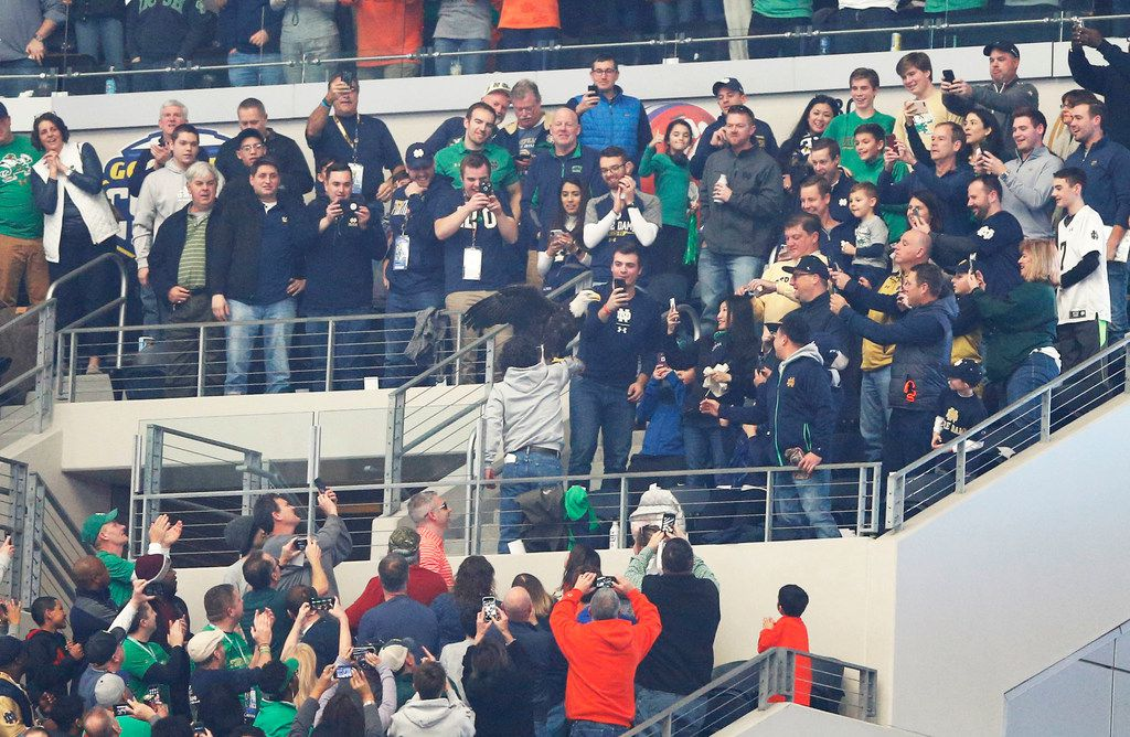 A Notre Dame Fighting Irish fan celebrates after an eagle mistakenly landed on a fan during the pregame festivities in a game against the Clemson Tigers at the Cotton Bowl Classic in Arlington, on Saturday, December 29, 2018. (Vernon Bryant/The Dallas Morning News)