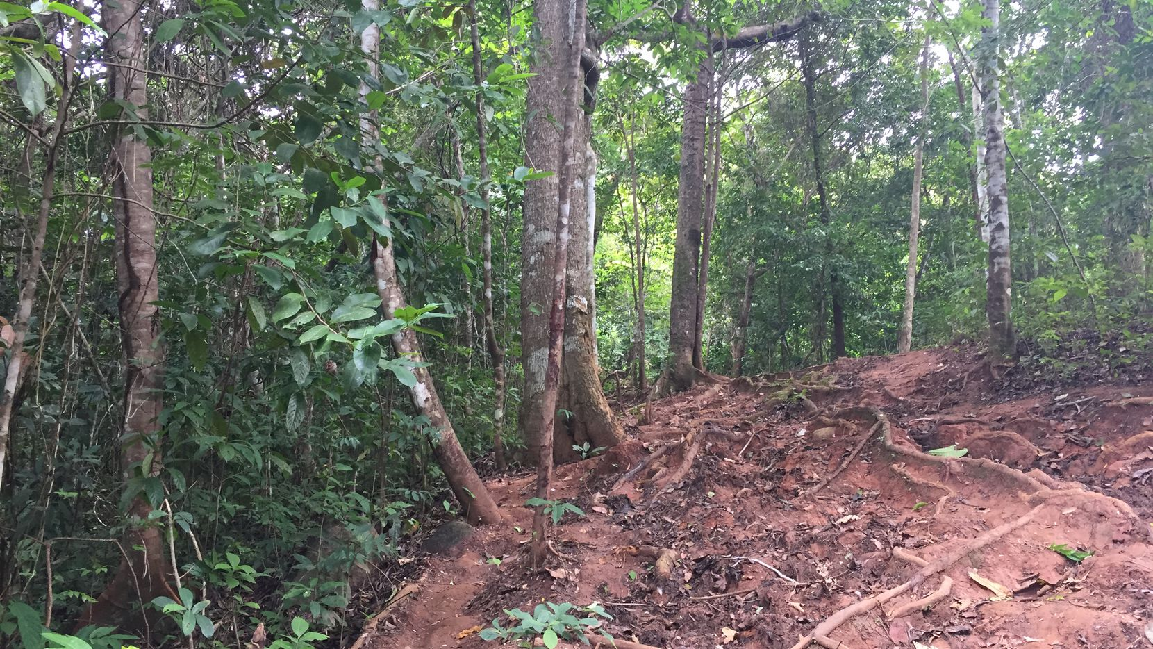 Some migrants reach Panama City by hiking through the Darien jungle, a treacherous part of a long journey to the U.S.