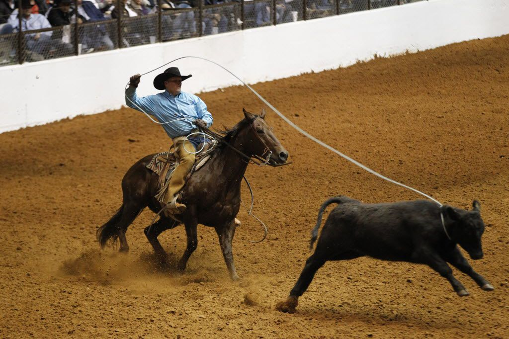 Carroll Jack Lewis, of Swenson Land and Cattle Co. in Stamford, Texas ropes a calf as he rides SMSflattop (cq) Blue during 2015 the Invitational Ranch Horse Show and Sale during Fort Worth Stock Show  Rodeo in Fort Worth,  on  January 18, 2015.