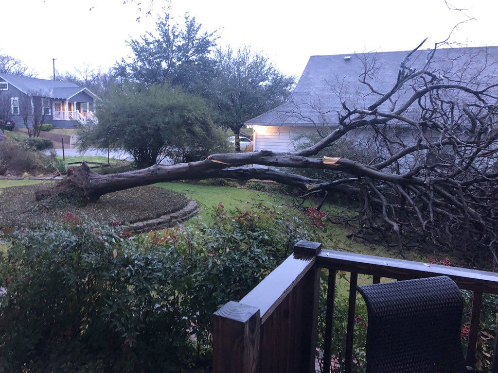 A fallen tree from overnight storms  on Neches Street in Oak Cliff on Wednesday.