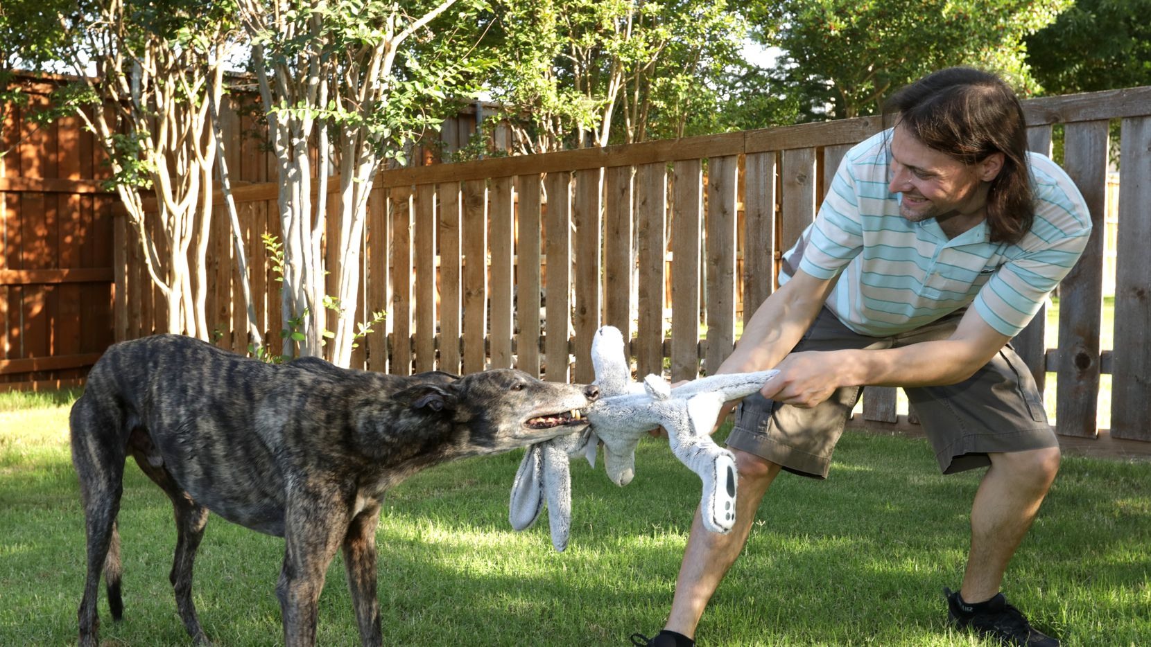 Greyhound Dolce Gambino and Don Beisert play tug-of-war at their house in Frisco.