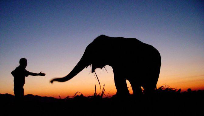 Arturo Islas Allende compró un elefante, llamado Big Boy, para rescatarlo de un circo en México.