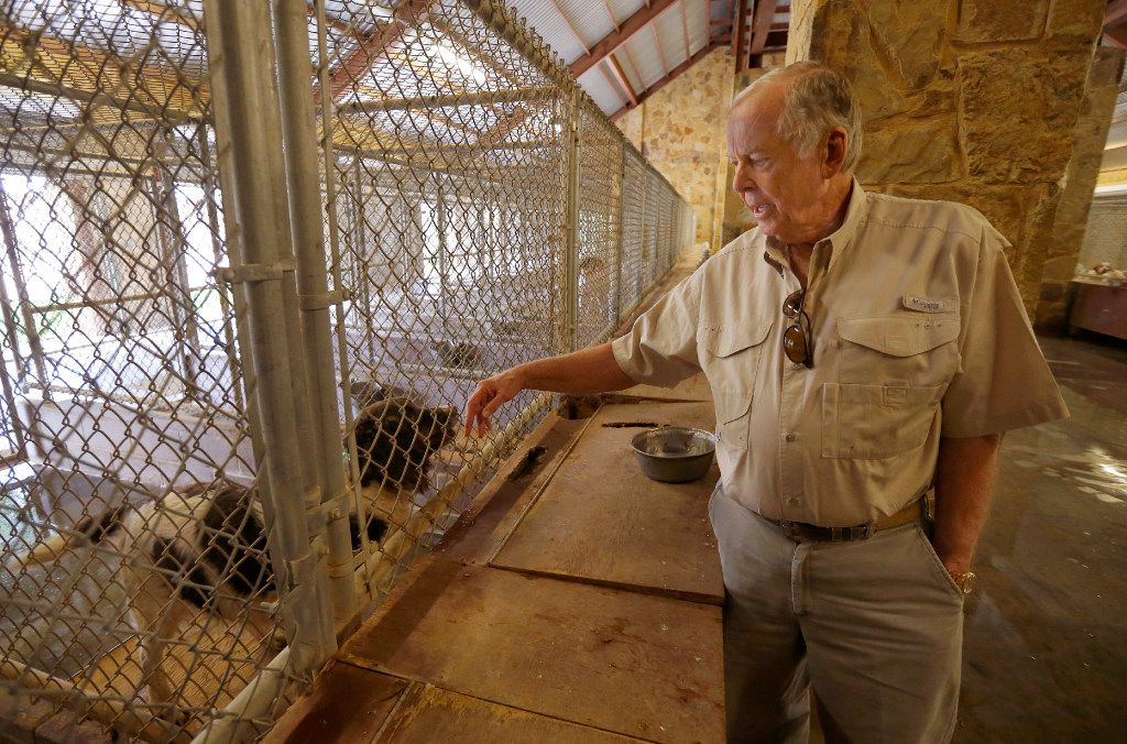 Businessman T. Boone Pickens visits some of the dozens of hunting dogs at his kennels on the Mesa Vista Ranch in the panhandle of Texas near the town of Miami, May 30, 2017. (Tom Fox/The Dallas Morning News)