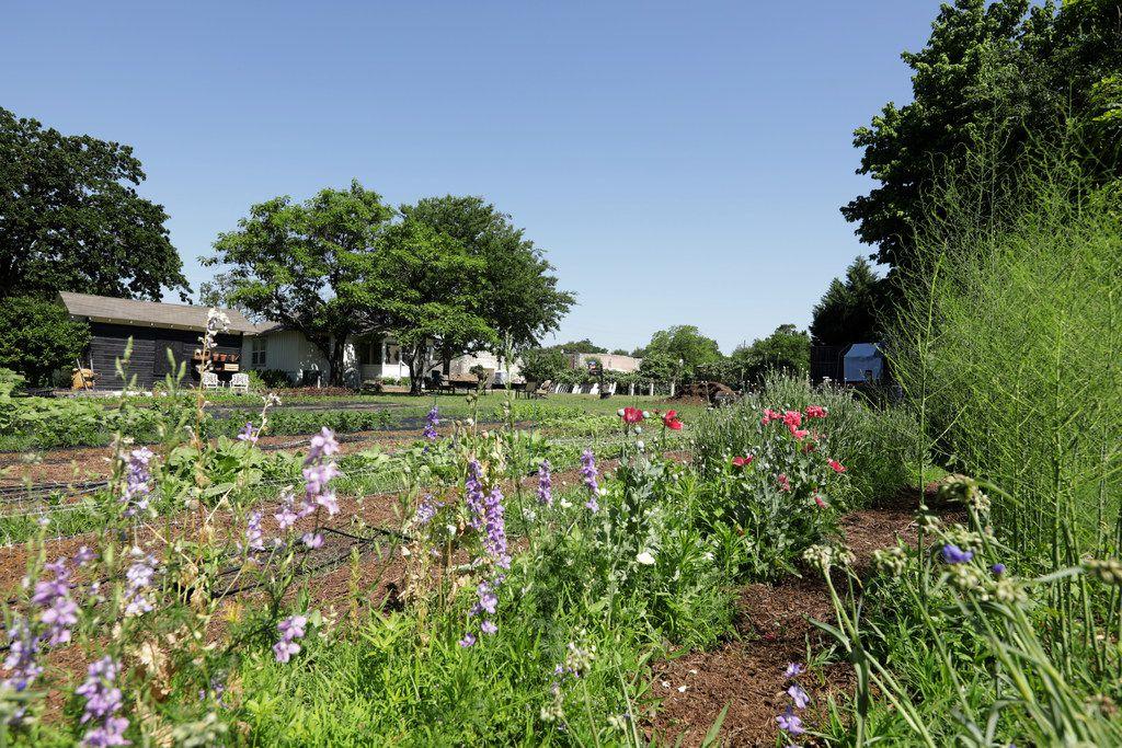 Amanda Vanhoozier's flower garden in Coppell.