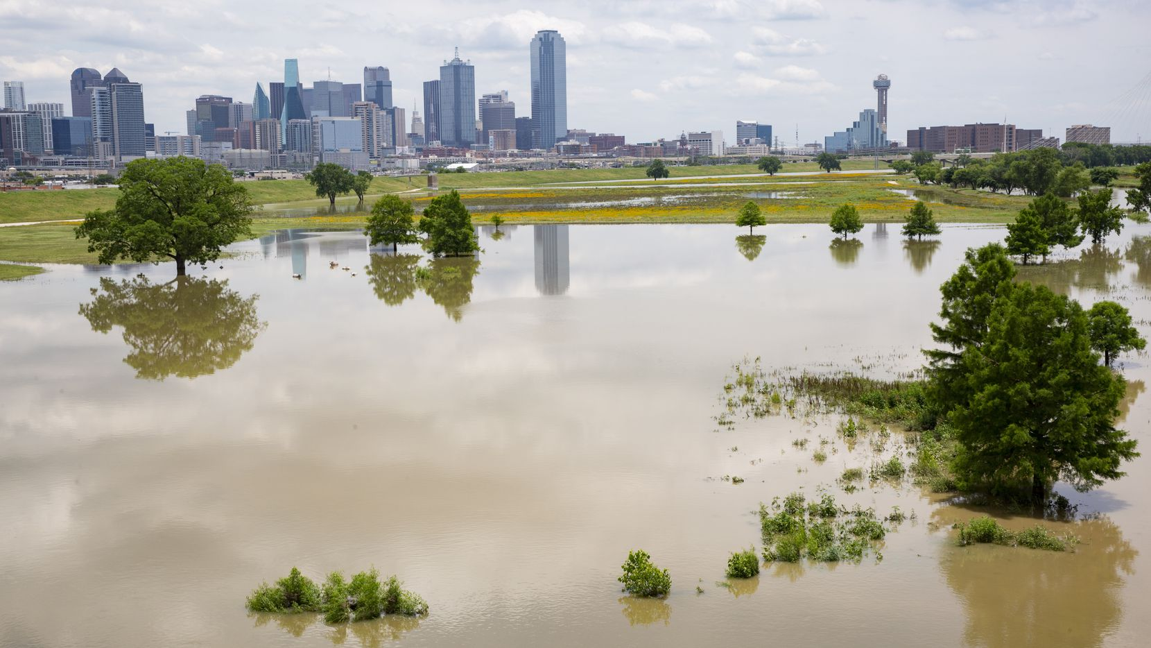 The Dallas Skyline seen from a flooded Trammell Crow Park and Trinity River on Wednesday, June 2, 2021, in Dallas.