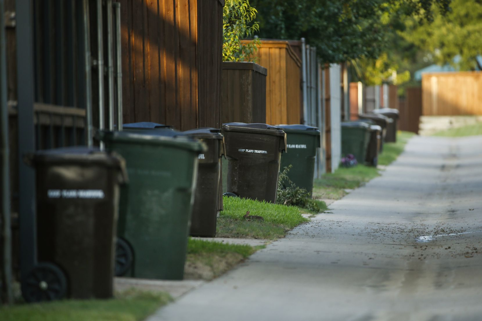 Trash cans line an alley in Plano. With less food refuse available at area restaurants, rats are turning more often to residential areas to find food, water and shelter.