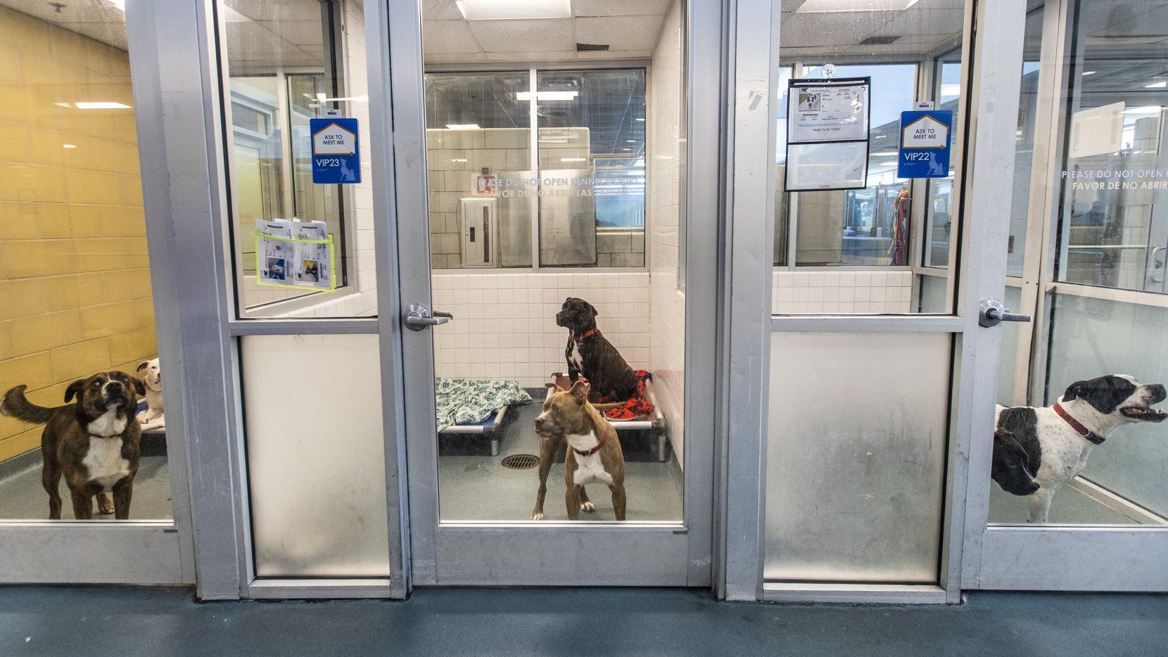 El departamento de policía de Dallas cuenta con una unidad especial de detectives que investigan los casos de crueldad de mascotas. Personas que sospechan crueldad de animal pueden hacer un reporte llamado al 911, pero el Servicio de Animales de Dallas también recomienda llamar al número de emergencia (911) si ve abuso activo.