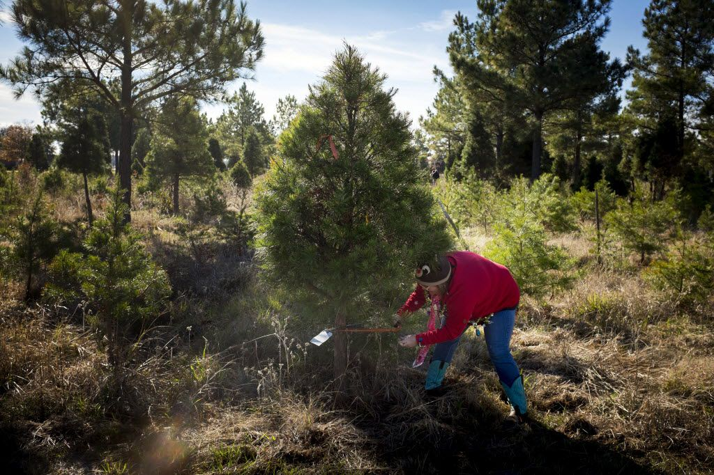 Kadee Tree Farm is one place to start a new family tradition.