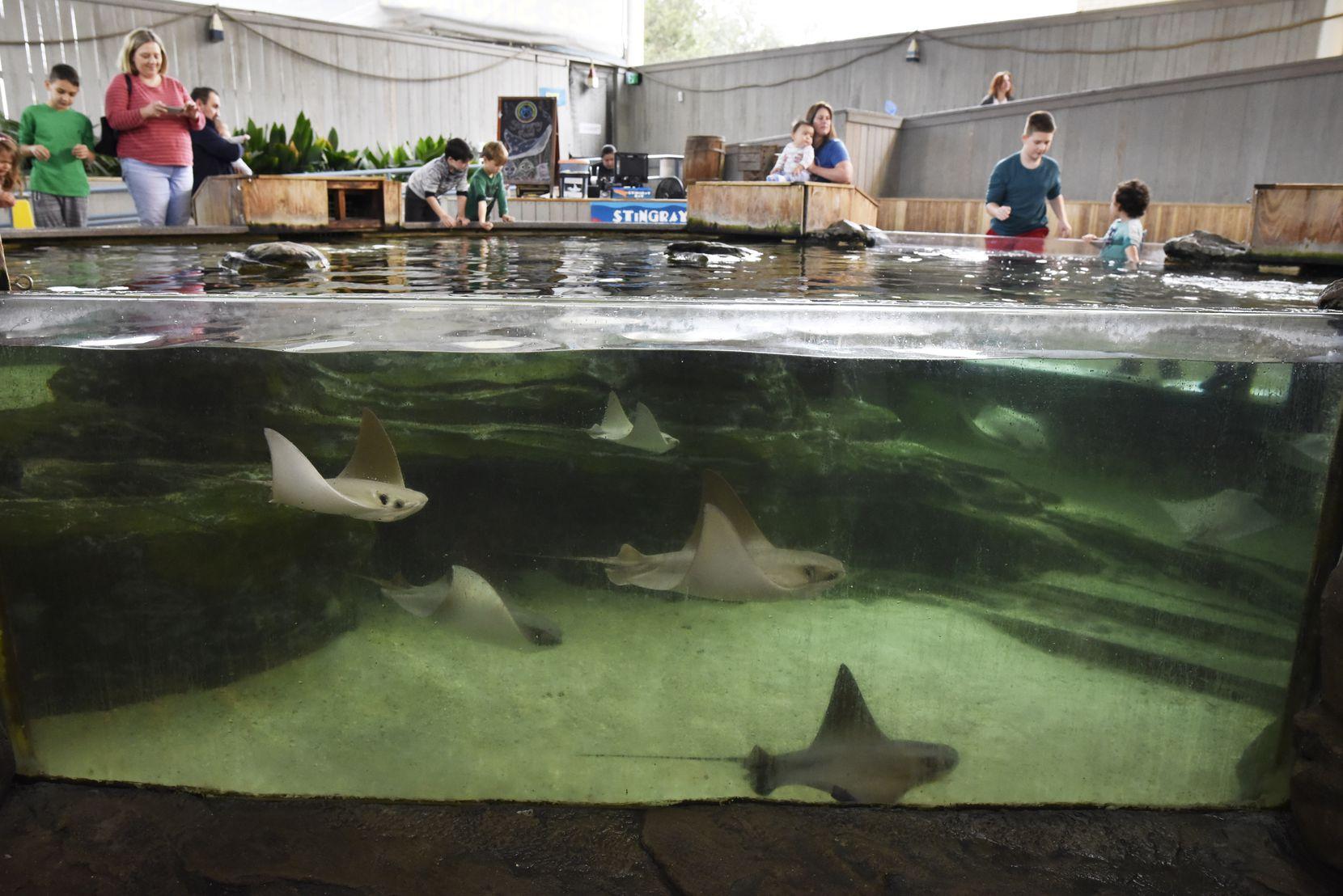 The Dallas Zoo plans to permanently close the Children's Aquarium at Fair Park.