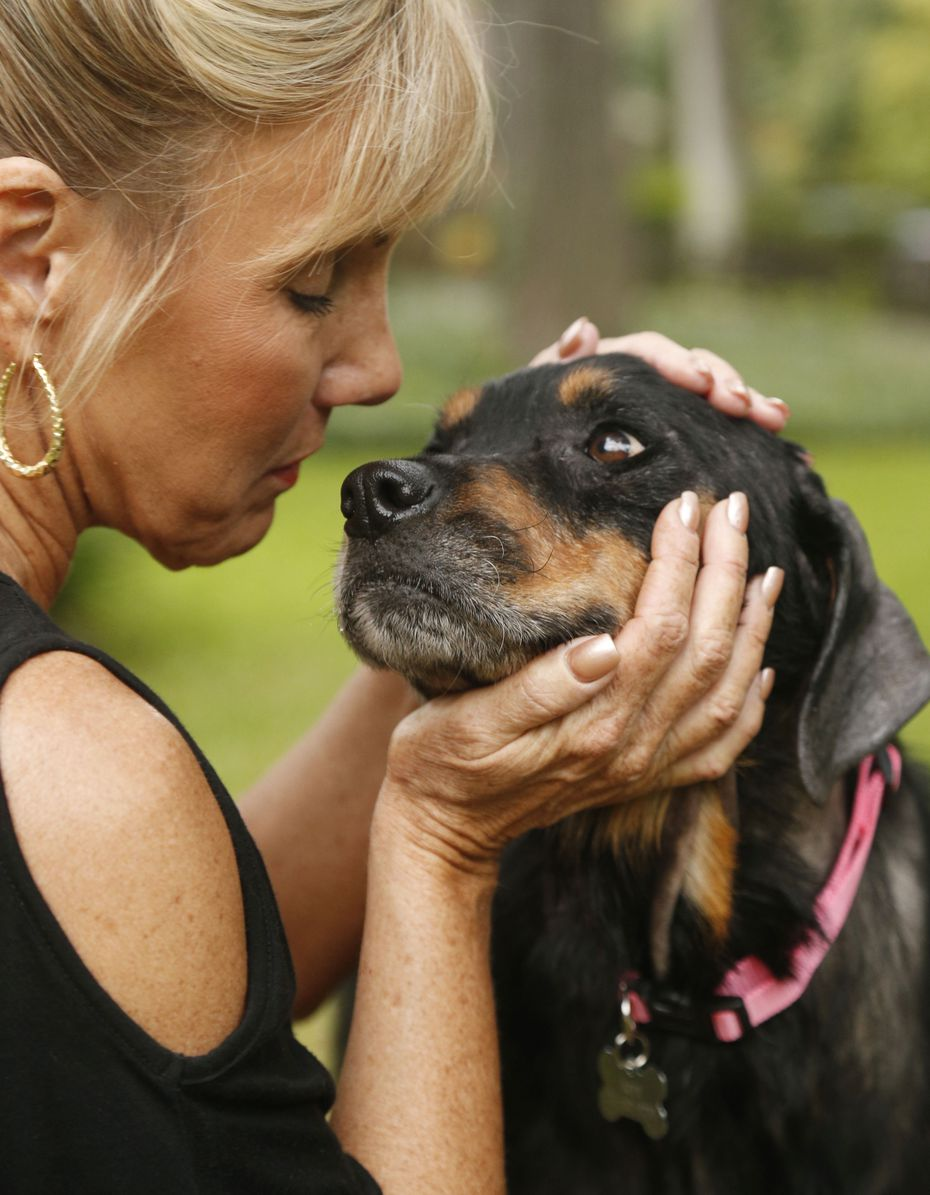 Hope the Rottweiler is recovering and regaining strength at the home of Sherri Green (pictured), who is fostering her. Hope was discovered near death and rescued by Marina Tarashevska.