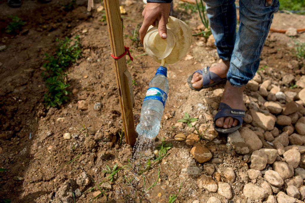 Azad Mahmoud Ahmed , 13, from Qamishlo in Syria, has been with his family in Camp Domiz since 2014. His grandfather in Qamsishlo thought him how to how to plant seeds and water the plants. The biggest challenge is the lack of water.
