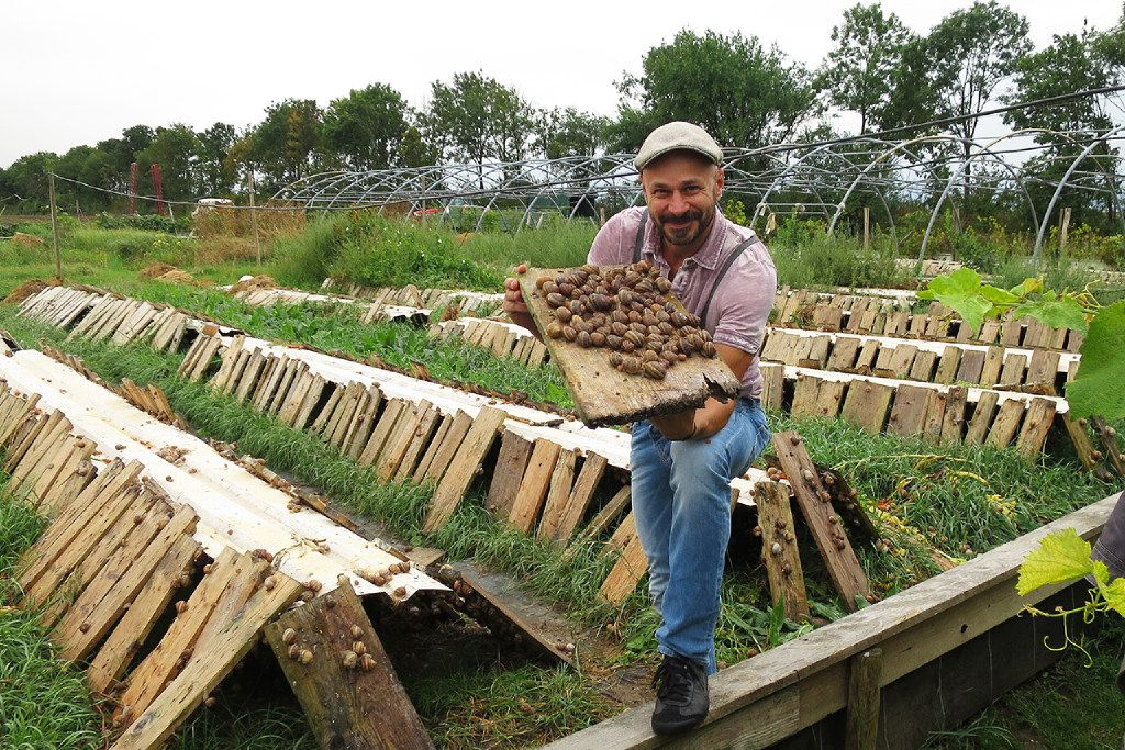 Andreas Gugumuck at his snail farm in Vienna.