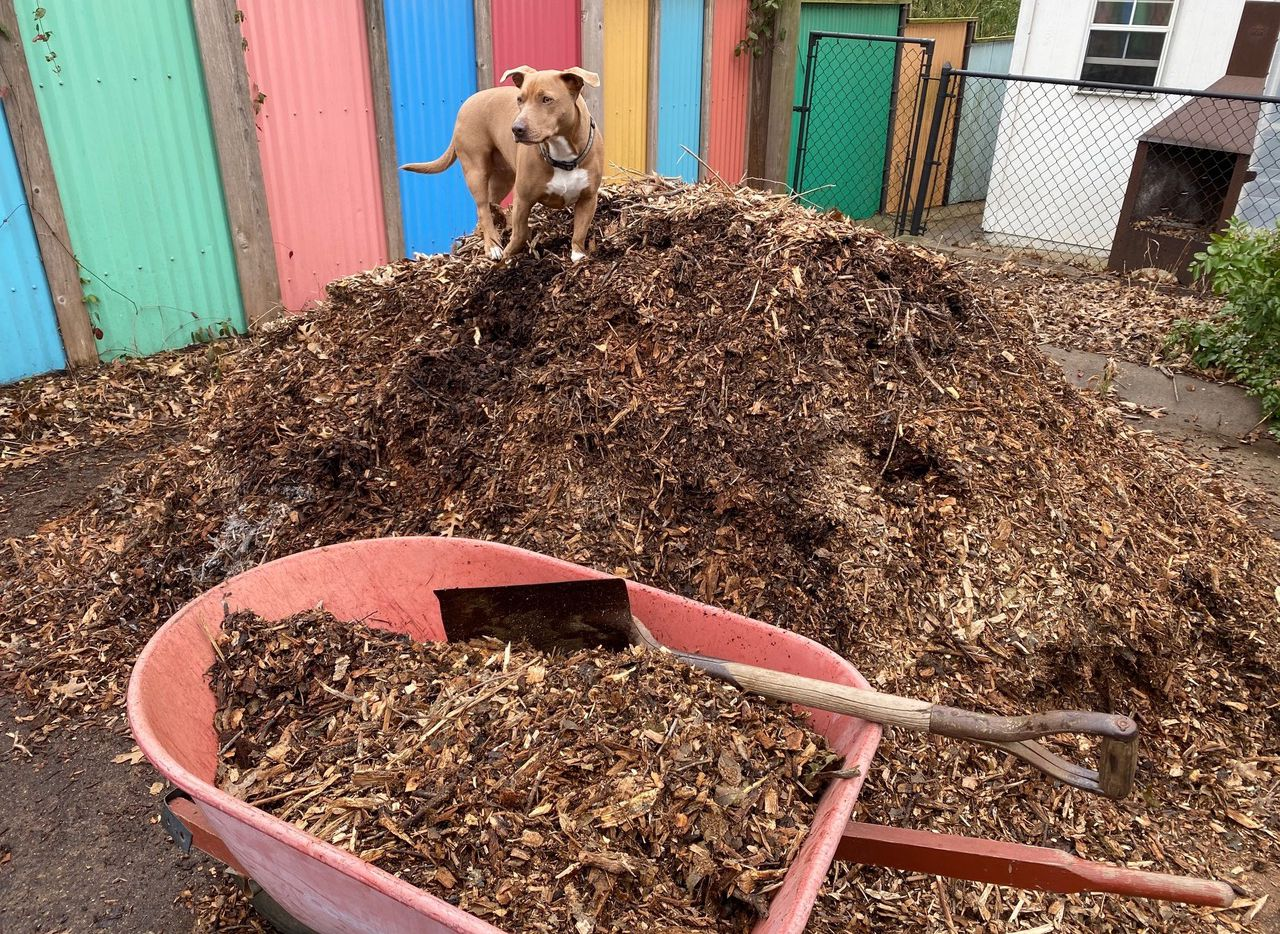 Shredded native tree-trimmings mulch (also called arborist wood chips) are the best choice for your plants. Having a canine helper like Nellie is optional.