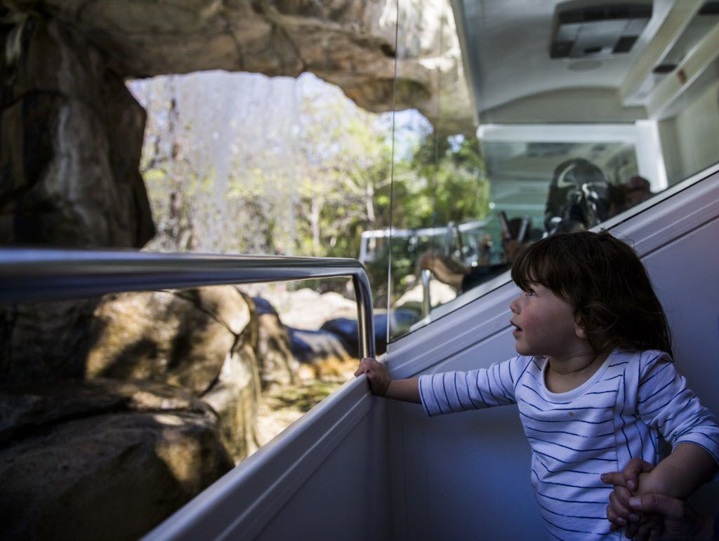 Penny Gilchrist, 2, held her mother's hand and watched as they rode under a waterfall during a preview ride on the Dallas Zoo's renovated monorail Thursday. The monorail has been closed since August 2014, when it stalled, trapping people on the tracks. (Ashley Landis/Staff Photographer)