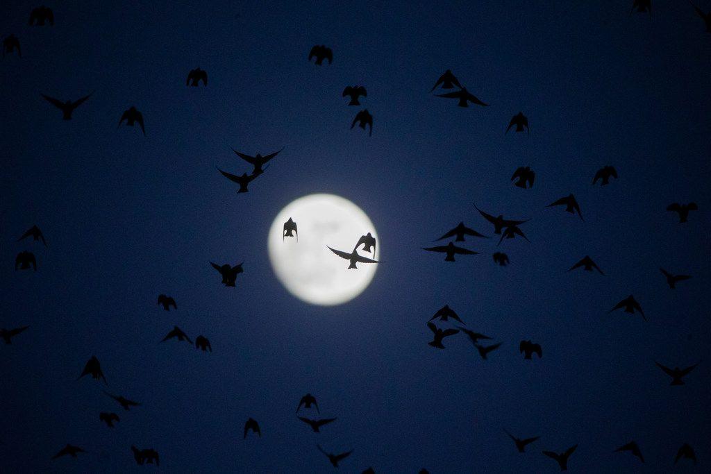El viernes habrá luna llena, también conocida como la luna de las cosechas.