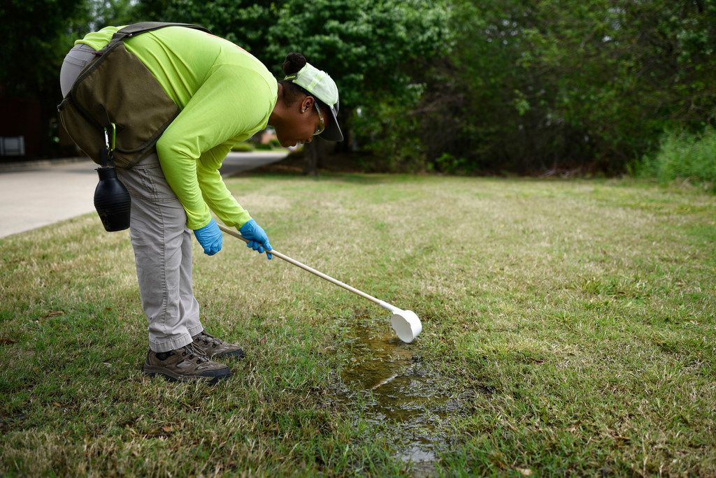 Erin Plaisance, assistant director of operations with Municipal Mosquito, uses a cup to scoop water from a puddle as she looks for mosquito larvae near a drainage ditch of a neighborhood.
