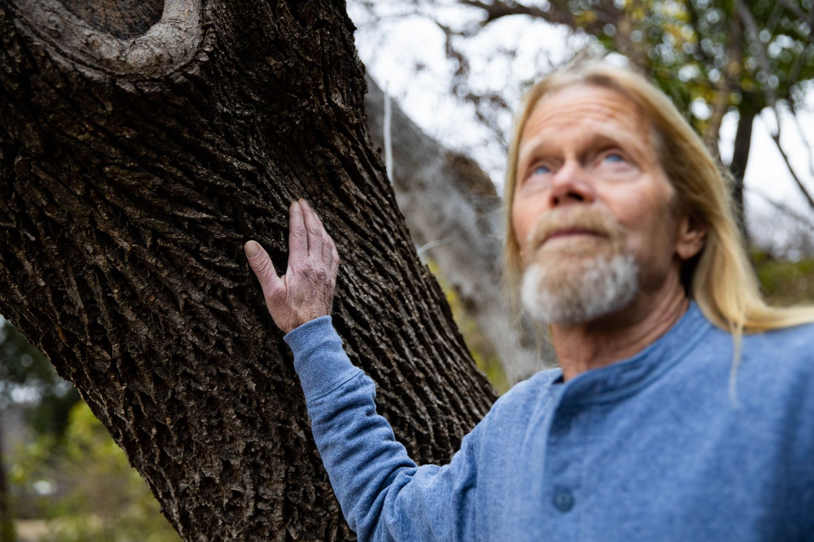 Steve Houser, a certified arborist, looks up at an ash tree at Reverchon Park in Dallas. Houser is calling attention to the emerald ash borer, which kills ash trees and was recently confirmed in Fort Worth and Denton. Research shows it could soon be in Dallas.
