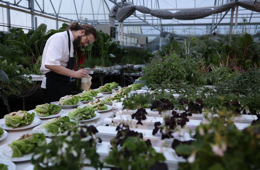 Chef Josh Sutcliff prepares salad surrounded by lettuces growing in the greenhouse at Profound Microfarms in Lucas.