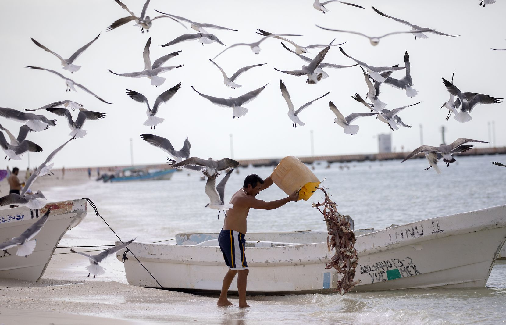 A local fisherman dumps the remains of his daily catch in the fishing town of Celestún.