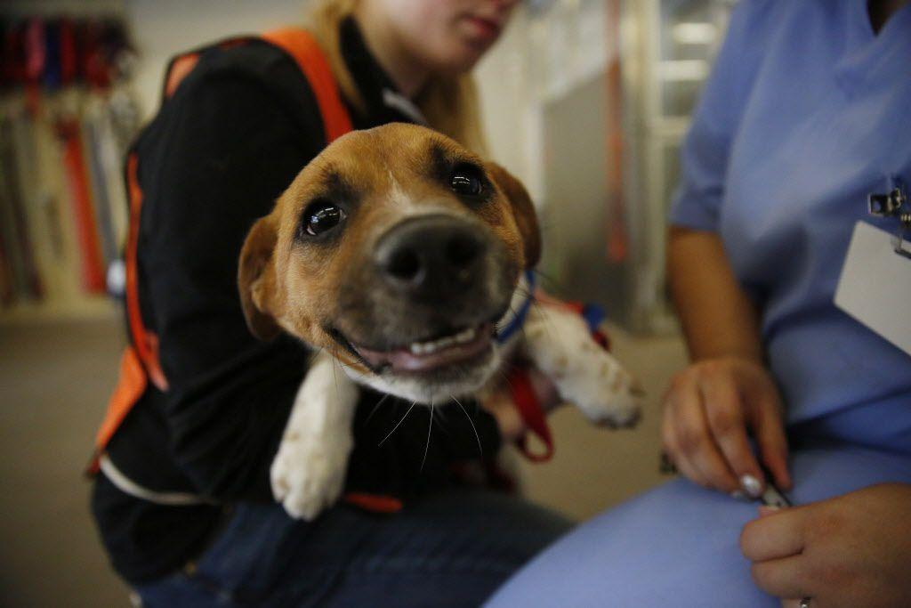 Con el evento Clear the Shelters se busca que los refugios de animales queden vacíos y todas las mascotas encuentren un nuevo hogar.