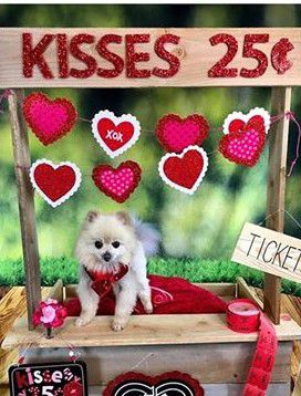 Valentine's photo sessions Saturday at Odyssey Pets will feature a kissing booth set.