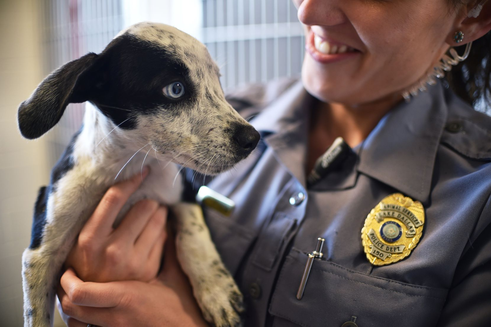 Officer Chelsea Stachyra held one of six puppies brought to the Lake Dallas Animal Shelter after they were dumped. The shelter will celebrate its 10th anniversary Saturday.