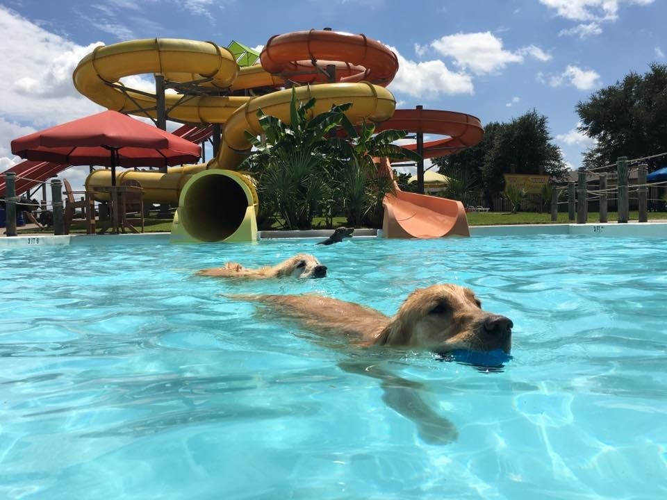 Bahama Beach's annual Paco's Poochie Plunge is Saturday.