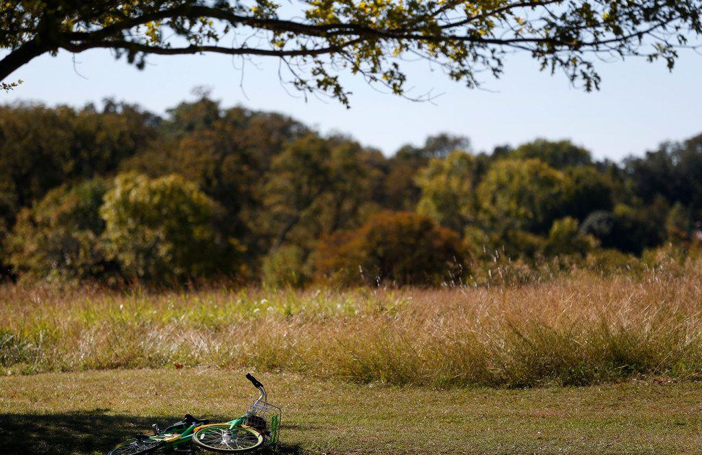 A LimeBike rental lies on its side near Winfrey Point near White Rock Lake in Dallas on Oct. 23, 2017.