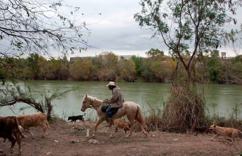 A man herds cows on the outskirts of the Mexican city of Reynosa, in Tamaulipas State, along the Rio Bravo river (or Rio Grande) across from the US city of Hidalgo, in Texas, on January 9, 2019 on the eve of the visit of US President Donald Trump to nearby McAllen, in the US. - Trump is expected to discuss migration issues during his visit on Thursday to McAllen in the southern border with Mexico amid a standoff over funding of the border wall.